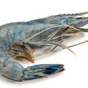 RAW BLUE SHRIMP
